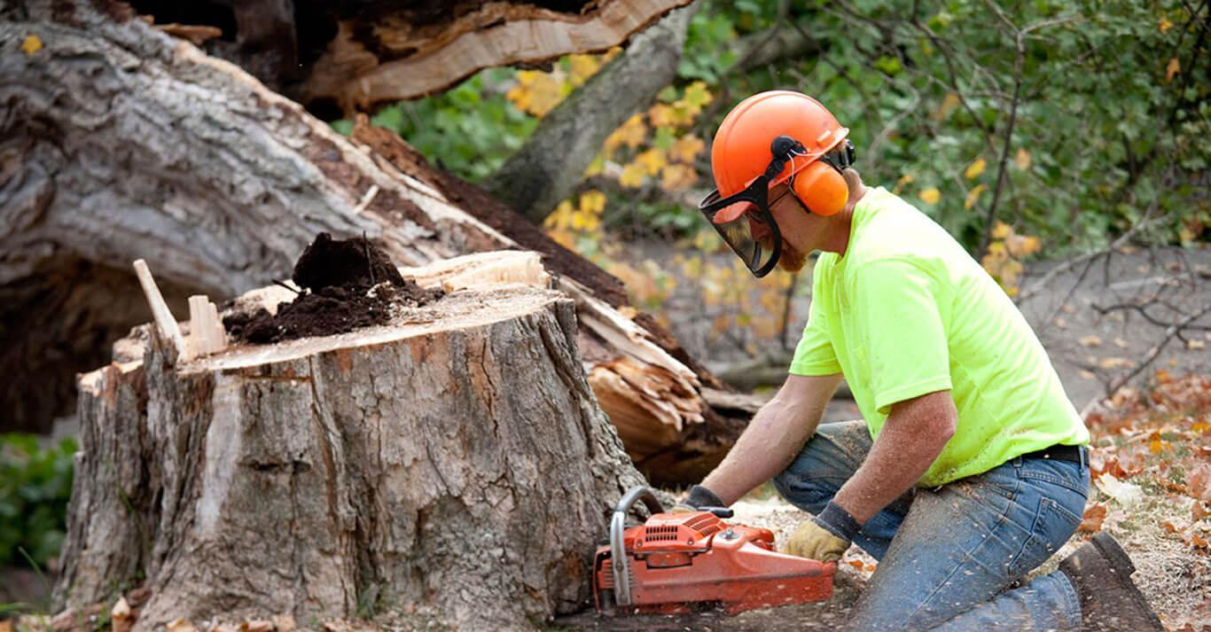 How to Choose a Tree Service Company?