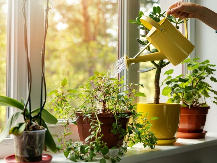 How Can Indoor Plants Add A Chic Look To Your House