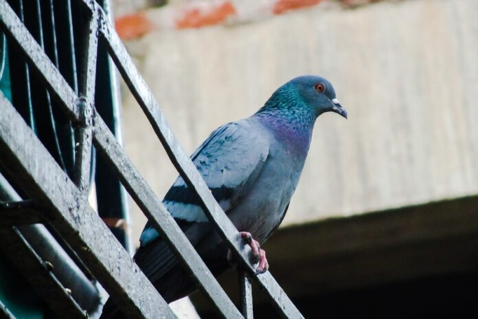 How to Keep the Pigeons off a Balcony