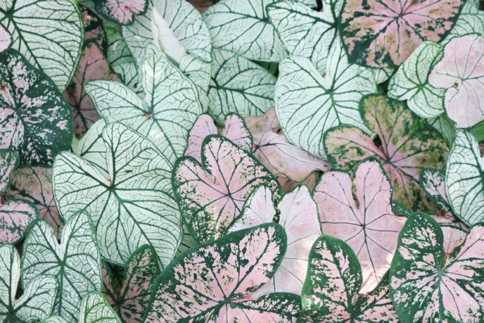 Why Floral Patterns Are Making A Big Impact in 2021 With Removable Wallpaper