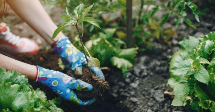 Simple yet Effective Gardening Tips for Beginners